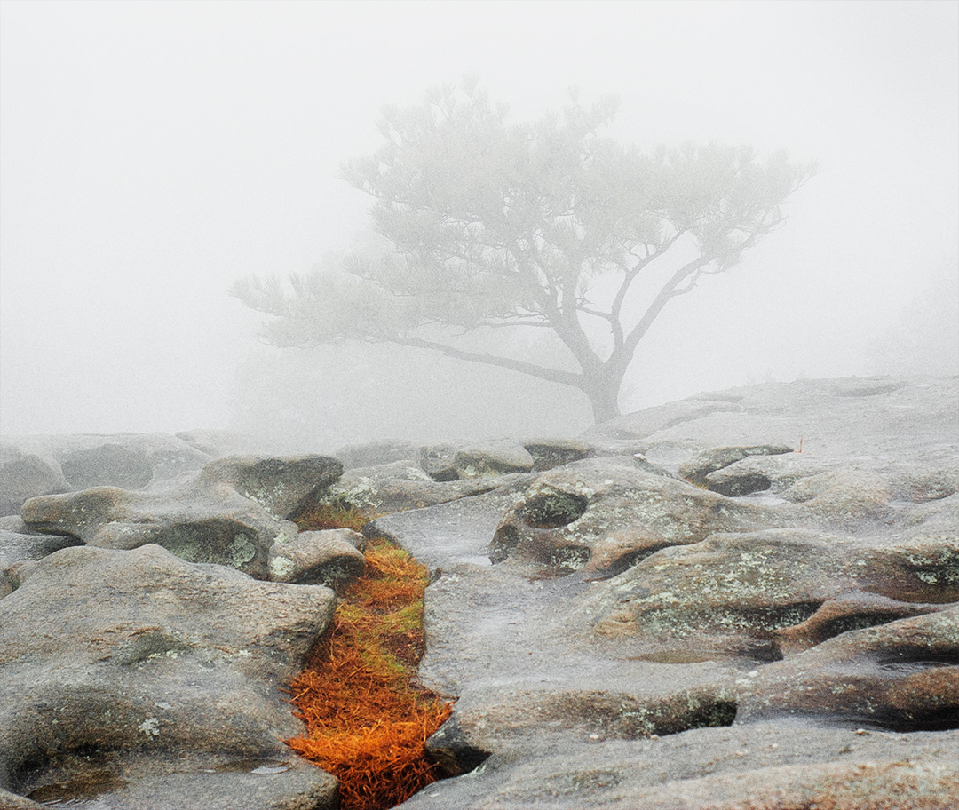 orange moss, foggy atmosphere, stone mountain